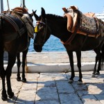 Hydra: Donkeys await their next load