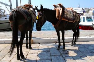 Hydra: Donkeys await their next load