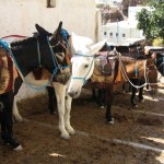 Santorini: Donkeys await their next passengers
